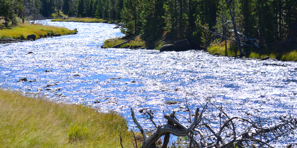 One of the many rivers that meander through Yellowstone National Park