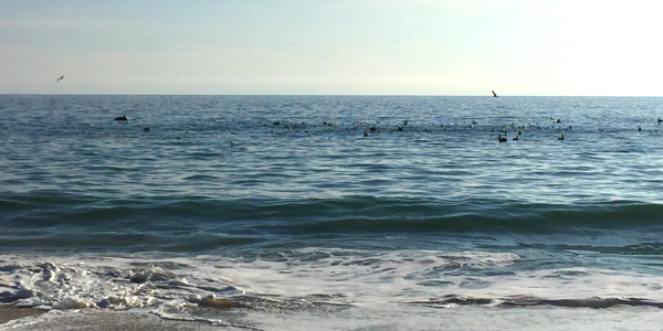 A close pass from a few dolphins were a big treat